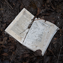 Photograph of open book between fallen leaves.