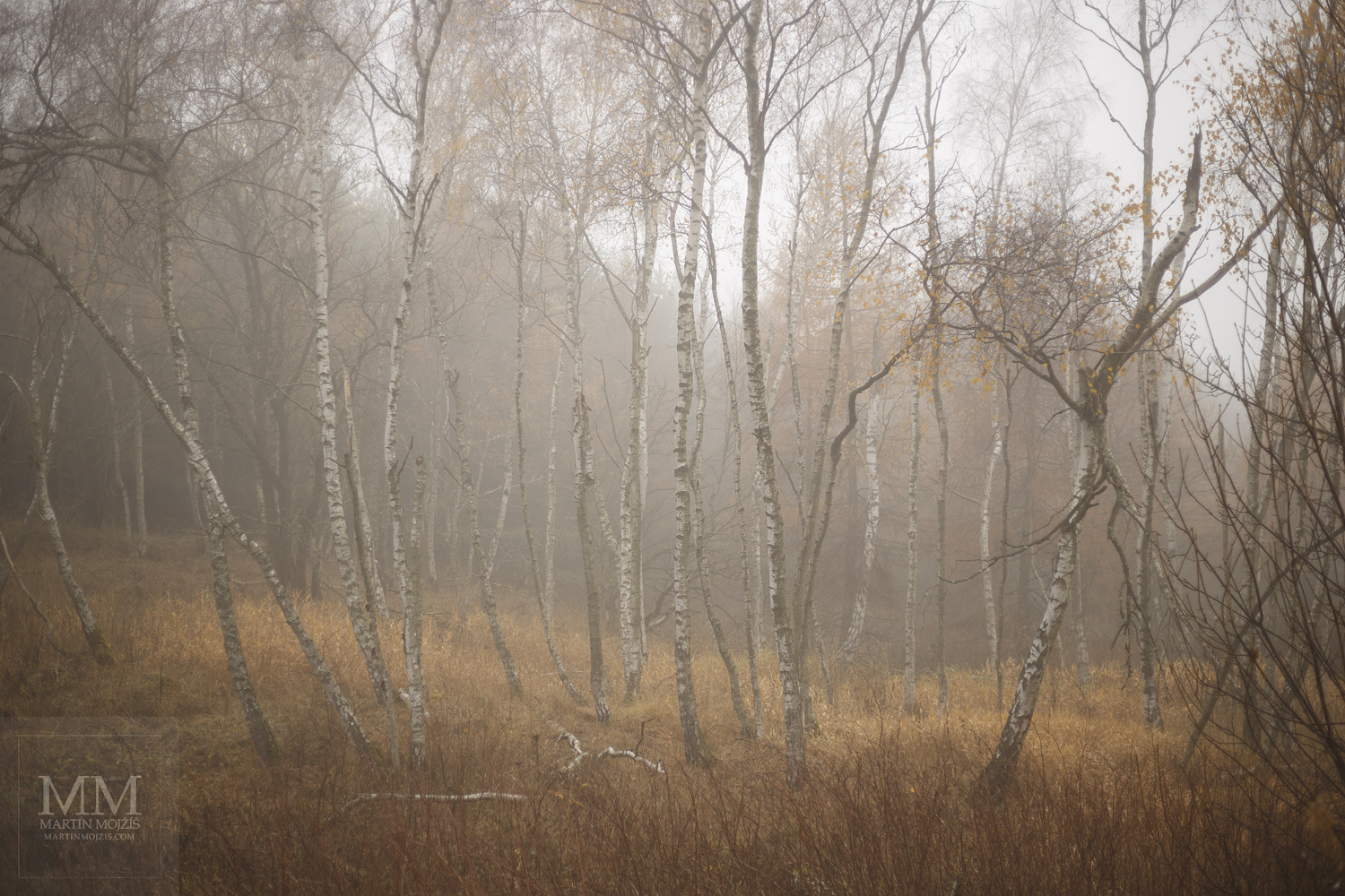 Large format, fine art photograph of birch grove in fog. Martin Mojzis.