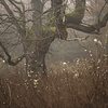 Large format, fine art photograph of tree and shrubs in foggy day. Martin Mojzis.